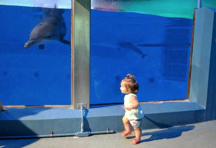 Eleanor Running With Dolphins